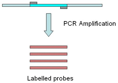 Amplification of dna by pcr animation download