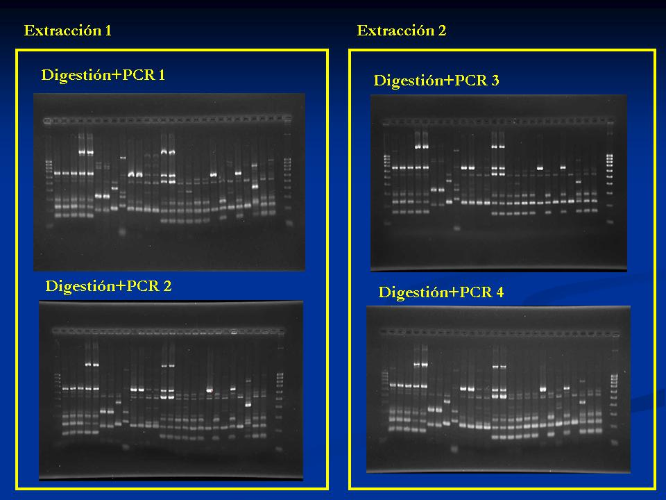 resAP-PCR
